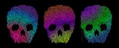 doodle-skull-rainbow-1 (Mara Fribus) Tags: art illustration skull doodle vector