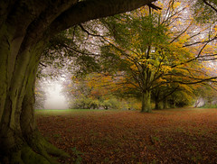 Autumn at the old school (grbush) Tags: autumn trees fall woodland northamptonshire overstone tokinaatx116prodxaf1116mmf28 sonyslta77