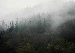 In the mist (Ana Elorza) Tags: mist fog dramatic noviembre bosque niebla