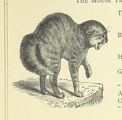 Image taken from page 111 of 'Woodland Romances; or, Fables and Fancies'