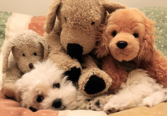 IMG_5586 (Pedro Montesinos Nieto) Tags: dog toys perro animales fragile mascotas juguetes laedaddelainocencia frágiles