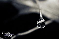 Drop (lifeasme40) Tags: abigfave justpentax simplysuperb ringexcellence
