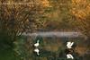 Dos patitos, en el agua, meneando la colita (Iñigo Escalante) Tags: autumn two naturaleza lake reflection verde green blanco nature water animal lago mirror swan agua reflect dos pajaros pato espejo reflejo otoño bizkaia vasco euskadi vizcaya cisne pais nationalgeographic
