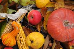 Autumn Flavour (roger_popa) Tags: november autumn fruits vegetables colours autumncolours toamna noiembrie legume fructe rogerpopa
