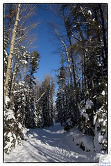 Hersey Lake Conservation Area (Lynn Clement) Tags: winter ontario trails timmins northernontario canon60d herseylake