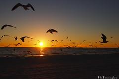 Treasure Island Sunset (Phil Kinsman (Olwebhound)) Tags: sunset sailboat island sand surf gulf florida gulls olympus treasures omd em5