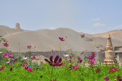 () Tags: flowers purple desert clear temples strong greenplants thesun thewind thesilkroad thesunshine thetraveling thegobi themogaogrottoes