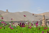 敦煌,莫高窟 (左慈康康) Tags: flowers purple desert clear temples strong greenplants thesun thewind thesilkroad thesunshine thetraveling thegobi themogaogrottoes