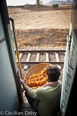 Train Whalla (ceciliandeby) Tags: door food india man train work landscape lunch nikon working travail manger paysage hindi homme inde djeuner hindous whalla nikond5000