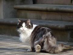 Molto sospettoso (kretz1008...) Tags: gatti armandodaniel