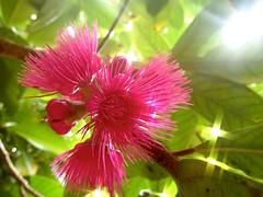 """Si quelqu'un dans l'assistance connait le nom de cette fleur... • <a style=""""font-size:0.8em;"""" href=""""http://www.flickr.com/photos/113766675@N07/14324550965/"""" target=""""_blank"""">View on Flickr</a>"""