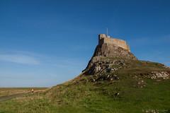 Lindisfarne Castle (Bill Herndon) Tags: uk england castle flickr published unitedkingdom olympus northumberland holyisland lindisfarnecastle e620 flickrwrherndon