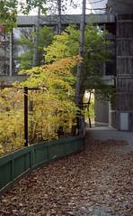 ql17_20161112_11 (sesquiotic) Tags: leaves foliage fallfoliage ontariosciencecentre canoncanonetql17giii kodakportra160asa