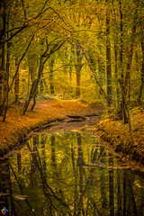 Golden autumn 9 (JTPhotography) Tags: autumn golden leaves trees nature water reflections sunny wildlife rivers lake panasoniclumixg6 olympus918mm