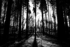 light (Michael Brooking Photography) Tags: light blackandwhite michaelbrookingphotography trees yosemite shadows sillouette