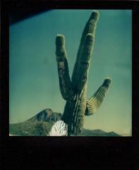 saguaro, new river, az (EllenJo) Tags: roidweek polaroidweek 2016 sx70 impossibleproject theimpossibleproject arizona az ellenjo ellenjoroberts polaroid instantfilm october19 saguaro cactus sonorandesert newriver