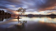 One Calm Tree. (Muhammad Syaiful Anam) Tags: calm lakewanaka longexposure mirror mountains newzealand tree wanaka 100pure 999 classic clouds epic lake lonetree nz oneofakind rjdlandscapes southisland