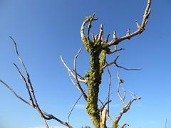 Kroon's polder Vlieland (Alta alatis patent) Tags: vlieland kroonspolder dead green algae