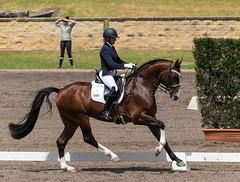 161023_Aust_D_Champs_Sun_Med_4.3_6895.jpg (FranzVenhaus) Tags: athletes dressage australia siec equestrian riders horses performance event competition nsw sydney aus