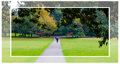 Autumn colours in Greenwich park... (kevingrieve610) Tags: foliage trees grass greenwich park fuji fujifilm wow depthoffield nature natura autumn 2016 green