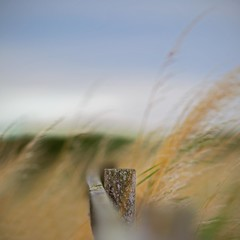 . . . melt away (orangecapri) Tags: orangecapri hff bokeh fencefriday fence movement green blue dof sky bluesky blur grass square squareformat 500x500 quadratum minimalist