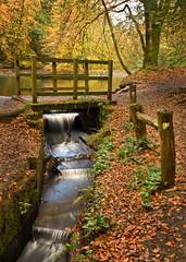 Bridge of Sighs (Langstone Joe) Tags: autumn fall bridge beechtrees waggonerswells surrey longexposure hindhead lake leaves