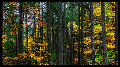 IMG_5868-Edit-Edit (bluecameraguy) Tags: canada canon5d canon 5d classic 5dc landscape vancouverisland bc cathedral grove fall