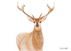Ciervo (Sansouart) Tags: ciervo deer dibujos sansouartblog drawings lascuola ciervomania deeraholic