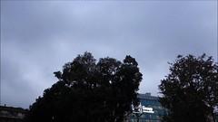 Gli storni e il Pirellone (STE) Tags: flying volo rx100 sony station central centrale stazione sky cielo building pirellone flock stormo birds uccelli starlings storni milan milano video
