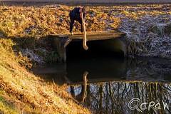 Echo bloazen (Qdraw.nl foto's) Tags: achterhoek midwinterhoornbloazer boven put blazen midwinterhoorn echo bloazen traditie twente people