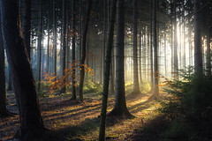 Back to forest (Petr Sýkora) Tags: les paprsky podzim light nature autumn fall morning cold sunrays