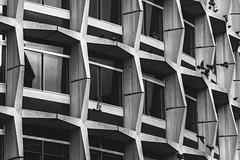 Rotunda. (ThePhotographersRepublic) Tags: brutalism btutal monochrome modernism postwar architecture brutalistarchitecture pigeons fly lfight birds wings concrete london form function