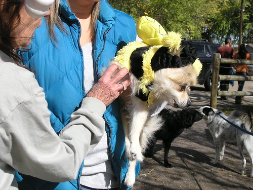 Photo - Howl-o-ween 2015 - 078