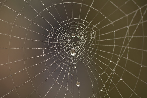 Droplets on spiderweb