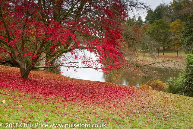 Autumn Colour at Stourhead