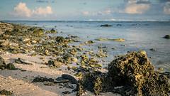 Desolate Beach (Laith Stevens Photography) Tags: morning beach rocks sunrise ngc nauru south pacific tropical desolate sea ocean golden hour olympusinspired olympus olly zuiko1240mmf28pro zuiko laith stevens