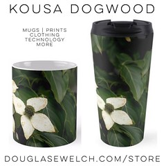 Get these Kousa Dogwood Mugs and Much More! Exclusively from http://ift.tt/1hfrEWq #mugs #home #housewares #prints #clothing #cases #technology #garden #flower #plant #nature (dewelch) Tags: ifttt instagram get these kousa dogwood mugs much more exclusively from douglasewelchcomstore home housewares prints clothing cases technology garden flower plant nature
