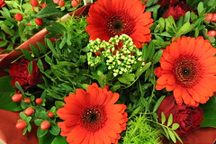 Flowers for Susy (excellentzebu1050) Tags: flowerssignoflove2016 flower coth5