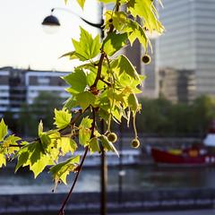 Afternoon light (georgemoga) Tags: bercy boat lamp leaves paris river seine tree water ledefrance france fr