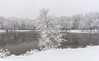 First snow (Lena and Igor) Tags: america us usa illinois travel nature lake pond water park snow flakes reflection tree trees first forest woods december winter landscape outdoor scenic snowfall dslr nikon d810 nikkor 2470