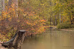 Stump in the Rain (Back Road Photography (Kevin W. Jerrell)) Tags: autumn rain levijacksonstatepark london kentucky autumncolors fall waterways stump nikond60 backroadphotography littlelaurelriver