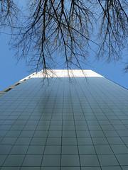 Die Zweige, das Licht. / 05.12.2016 (ben.kaden) Tags: berlin marzahn brunobaumstrase plattenbau architekturderddr architektur 2016 05122016