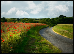 Un CHAMP de COQUELICOTS (Mary.Do) Tags: berry route champ coquelicots septaine colzasmaldsherbs