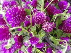 Lilitas (Digenes ;)) Tags: flowers flores flower flor lilas flawers fasoles