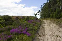 Rothbury circular walk (Tetramesh) Tags: uk greatbritain england unitedkingdom britain northumberland gb rothbury tetramesh