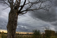 Angry Sky (JEGowrie) Tags: tree fall field clouds ominous hay hdr