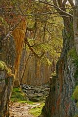 Terry's Tree (RoystonVasey) Tags: autumn lake tree canon eos zoom district sigma cumbria bent bender larch quarry tilberthwaite 1770mm 400d ldnp