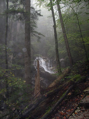 Autumn forest (aniko e) Tags: autumn mist mountains fog forest germany landscape bavaria waterfall hiking hills explore kochel kochelamsee
