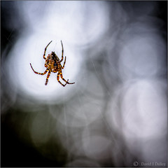 The Long Wait (Robots are Stupid) Tags: wood uk greatbritain england hairy macro nature forest woodland insect sussex spider waiting upsidedown westsussex unitedkingdom bokeh britain wildlife web arachnid spin spiderweb silk 100mm cobweb naturereserve spinning wait hanging woven spidersweb hang weave arachnophobia hairylegs southdowns britishwildlife cobwebs cocoon midhurst spun stedham spidersilk sussexwildlifetrust tokina100mm d700 tokina100mmf28atxprod nikond700 stedhamcommon sussexcountryside southdownsnationalpark elstedroad daviddalley davidjdalley stedhamwithiping