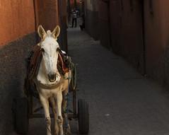 More Marrakech street scenes (shane kerry) Tags: food photography asia shane spice markets donkey palace mosque kerry hose spices marrakech medina souks morrocco resturants elbadipalace benyoussefmadrasa shanekerry